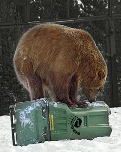 Bear Proof Cans
